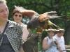 Noch ein Falke